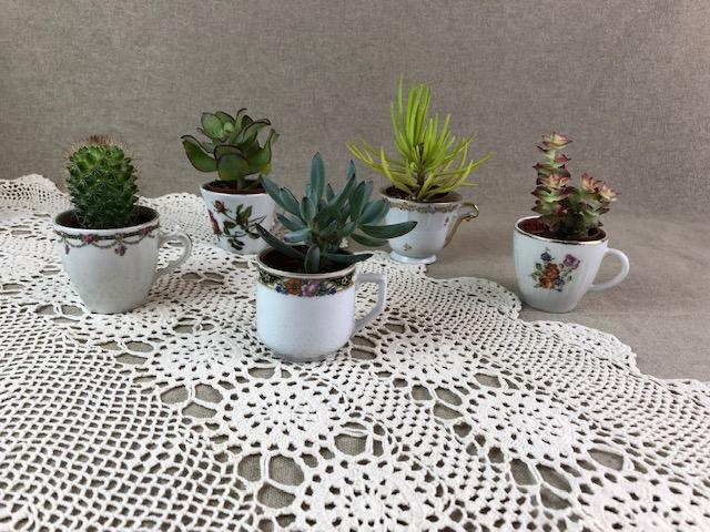 inspiration déco vintage : cactus dans des tasses aux tons roses