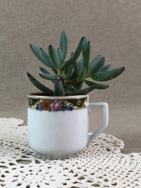 FOCUS inspiration déco vintage : cactus dans des tasses aux tons roses